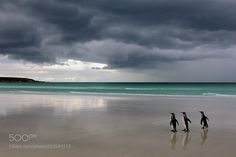 Dark Clouds by ElmarWeiss #animals #animal #pet #pets #animales #animallovers #photooftheday #amazing #picoftheday
