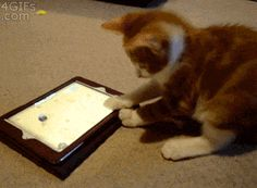 Ah did you see that mouse. cutest cat gif you'll see all day.