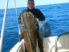Enormous cobia speared off Brazil nearly 30 pounds heavier than record Oooooh yeah baby I want this guy in my aqaurium !!!!