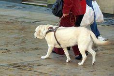 Hay medidas preventivas que salvarán la vida de tu perro en casos excepcionales. Descubre cuáles son. ¿A qué esperas para aplicarlas?