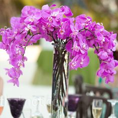 Orchids are perfect for the wedding flower option.