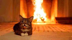 Słyszałem, że w internecie lubią koty...