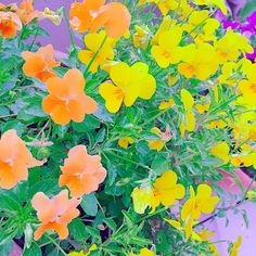 orange&yellow