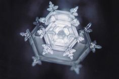 """FamilyLove - What has put Dr. Emoto at the forefront of the study of water is his proof that thoughts and feelings affect physical reality. By producing different focused intentions through written and spoken words and music and literally presenting it to the same water samples, the water appears to """"change its expression""""."""