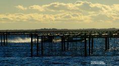 Sète, parc à huîtres sur l'étang de Thau du côté de Bouzigues
