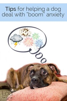 Thunder Days  Boomie Nights - Tips for helping a dog deal with firework and storm anxiety - @lolathepitty