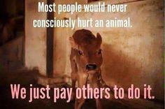 Vegan Media - Defending Animals Online