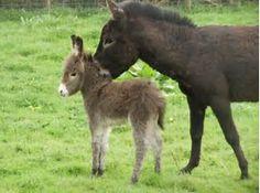 Image result for donkey's