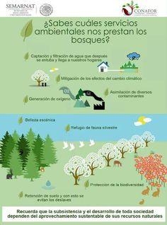 #Bosques #Biodiversidad