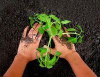 Schnu1 - Kräuterhexe: Holler-Kamillen-Salbe gegen raue Hände und Füße