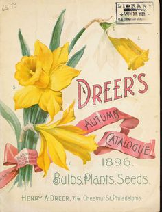 seeds_catalogs-00868 - 079-Daffodil [2772x3642] - domain picture plants transfer flower nature Graphic orchid orchidacaea beautiful 18th decoration ArtsCult.com collage public 1900s royalty art qulity use masterpiece Edwardian naturalist fabric illustration Artscult blooming ornaments wall digital clipart commercial lithographs ArtsCult floral botany flora printable scrapbooking high nice 17th pages craft century flowers vintage instant collection 1700s download pack Victorian Pictorial…