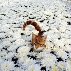 Cute kitty in a flower field! – We Heart It Cute kitty in a flower field! Cute kitty in a flower field! Cute Funny Animals, Cute Baby Animals, Animals And Pets, Cute Cats, Funny Cats, Pretty Cats, Beautiful Cats, Animals Beautiful, Chat Kawaii