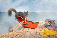 Adorable Pictures Capture The Life Of A Squirrel Squirrel Pictures, Animal Pictures, Cute Pictures, Cute Squirrel, Squirrels, Funny Animals, Cute Animals, Chipmunks, Models
