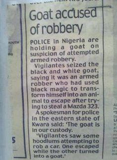 Funny Newspaper Headlines: Goat Accused of Robbery in Nigeria. Real funny newspaper headlines.