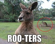 Funny, cute, wonderful animal pictures and videos. Time Pictures, Animal Pictures, Funny Animals, Cute Animals, Awkward Animals, Animal Funnies, Wild Animals, Australian Animals, Funny Photos