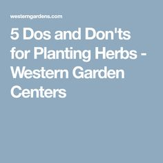 5 Dos and Don'ts for Planting Herbs - Western Garden Centers