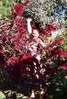 Meet Lightworker & Master Herbalist, Kelly Perkins!