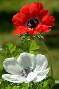 ♥♥Quando as palavras fogem, as flores falam.✿✿*