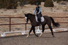Horses, Horses, & Photography