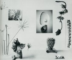 New Horizons in Flower Arrangement by Myra J. Brooks with Mary Alice and John P. Roche, 1961