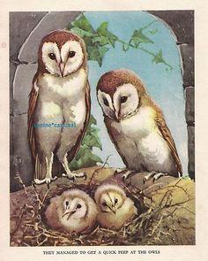 Barn Owls Owl 1930s Childrens Vintage Art Print by A E Kennedy