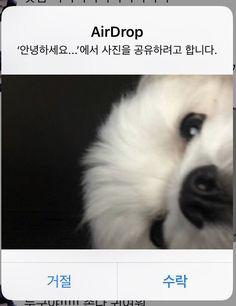 Photo Dump, City, Memes, Funny, Dogs, Animals, Instagram, Korean Language, Animales