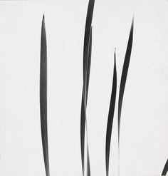 Cattails against Sky, 1948 | Harry Callahan