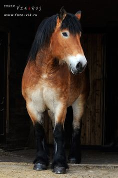 Reminds me at a horse at our farm named Strider