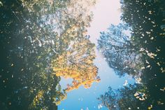 Autumn reflection – free photo on Barnimages Fire Pit Coffee Table, Reflection Pictures, Water Pictures, Tropical Forest, Beautiful Mirrors, Desert Island, Breath In Breath Out, Hd Picture, Hd Images