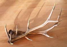 Cool DIY Jewelry Display Of Antlers | Shelterness