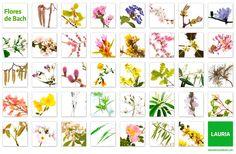 25 Basta Bilderna Pa Dr Bach Healing Herbs Herbalism Och Herbs