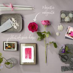 Home - David Austin Luxury Cut Roses Pear Drops, David Austin, Magenta, Hue, Beautiful Flowers, Indigo, Forget, Gallery Wall, Lemon