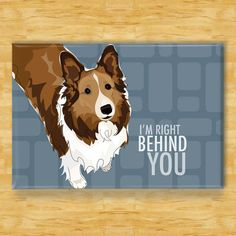Sheltie Magnet  Right Behind You  Shetland Sheepdog by PopDoggie