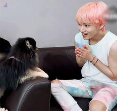 Tannie is so cute! And taetae is also so cute! Bts Bangtan Boy, Bts Jimin, Foto Bts, K Pop, Bts Dogs, Bts Video, Seokjin, Bts Memes, My Love
