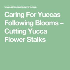 Caring For Yuccas Following Blooms – Cutting Yucca Flower Stalks