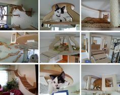 Cat Furniture Set: Modular Hangouts for Walls & Ceilings Pet Furniture, Furniture Sets, Cat Walkway, Diy Cat Tree, Cat Trees, Millionaire Homes, Outdoor Play Areas, Cat Shelves, Cat Playground