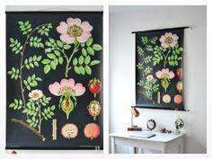 Vintage school pull down chart map botanical hazelnut flower plant West German biology print