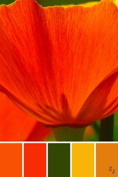 ZJ Colour Palette 447 #colourpalette #colourinspiration