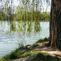 #perfecthome #spring #lake #water #gras #tree #photo #beautiful #perfect #nature #amazing