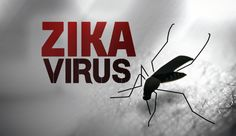 Наш специалист с важни разкрития за Зика, вижте как да се предпазите от коварния вирус. - http://novinite.eu/nash-spetsialist-s-vazhni-razkritiya-za-zika-vizhte-kak-da-se-predpazite-ot-kovarniya-virus/