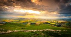New Zealand's first sheep were set ashore by Captain Cook in 1773. At their peak…