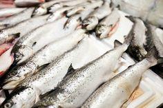 DRNA establece récord en cantidad de licencias de pesca...