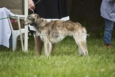 Nashie East Coast, Dogs, Photography, Animals, Photograph, Animales, Animaux, Pet Dogs, Fotografie