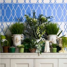 Wallpaper - Cole & Son - Folie - Parterre Border - Paint & Paper Ltd