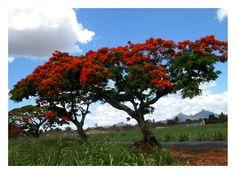 Couleur de Maurice - Albion, Black River - Mauritius