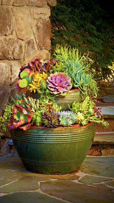 Succulent Gardening, Succulent Pots, Cacti And Succulents, Planting Succulents, Organic Gardening, Garden Plants, House Plants, Planting Flowers, Potted Plants