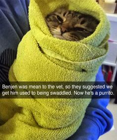 Animal Pictures That Make You Laugh Uncontrollably - 8