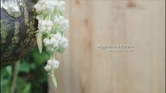 #doffphotostory  WA : 085641234507  IG : doff.photostory FB : doffphotostory  #prewedding #weddings #preweddingsemarang #fotografiindonesia #wedding  #weddingindonesia #fotosemarang #clip #video #simpleclip #savethedate #picture #preweddingvideo #couples #videosemarang #photography #behindthescenes #weddingday #indonesiawedding #traditionalwedding #cinematography #fotoindonesia #savethedate #foto #photographer #videography #wedding #indonesia #semarang #cinematography #foto #photooftheday…