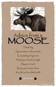 Each postcard says: Advice from a Moose Think big Spend time in the woods Eat plenty of greens Hold your head up high Stay on track Keep your nose clean It's OK Animal Spirit Guides, Spirit Animal, Advice Quotes, Me Quotes, Irish Quotes, Cousin Quotes, Advice Cards, Qoutes, Funny Quotes