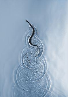 Swimming Snake in Miami. Photo by Adam Fuss.